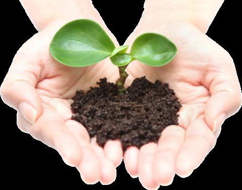 >Environmental Philosophy